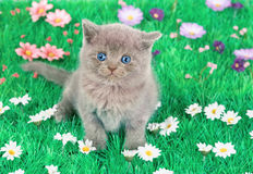 Kitten sitting in floral lawn Royalty Free Stock Image