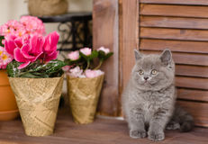 Kitten sitting beside a flower pot. looking away Stock Photos