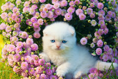 Kitten sitting in flowers Stock Images