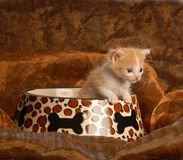 Kitten sitting in food dish Royalty Free Stock Photos