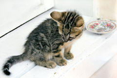 Kitten 8. Kitten sitting in front door Royalty Free Stock Photos