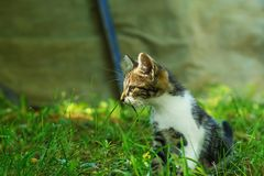 Kitten is sitting in the grass, and looking aside. Royalty Free Stock Images