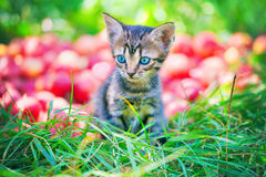 Kitten sitting on green grass Stock Photography