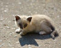 Kitten sitting on the ground Royalty Free Stock Photos