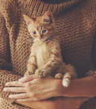 Kitten sitting on hands Stock Images