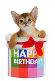 Kitten sitting in a Happy Birthday bucket Royalty Free Stock Photography