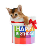 Kitten sitting in a Happy Birthday bucket Royalty Free Stock Image