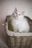 Kitten Sitting In A Wicker Basket Royalty Free Stock Images