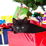 Kitten sitting inside of a christmas gift Royalty Free Stock Photography
