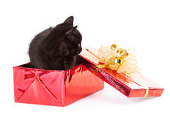 Kitten sitting inside of a christmas gift on white Stock Photo