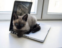 Kitten sitting on a laptop, against the window Stock Photography