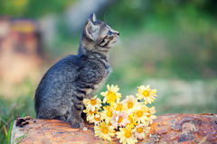 Kitten sitting on a log. Next to flowers Royalty Free Stock Photos