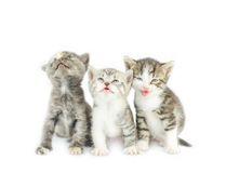 Kitten sitting and  looks up  Royalty Free Stock Photography