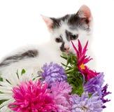 Kitten sitting near flowers Stock Photos