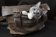 Kitten sitting in an old leather bag. Funny kitten sitting in an old leather bag with a sad look and do not want to let the owners to go to work Royalty Free Stock Photography