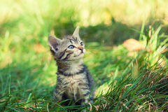 Kitten Sitting On The Grass Royalty Free Stock Images
