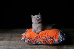 Kitten sitting on an orange pillow, black background. Wooden floor, isolated portrait stock photography