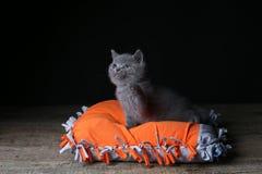 Kitten sitting on an orange pillow, black background. Wooden floor, isolated portrait royalty free stock photos