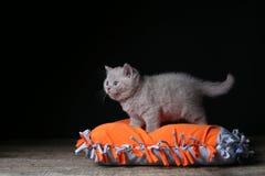 Kitten sitting on an orange pillow, black background. Wooden floor, isolated portrait stock photo