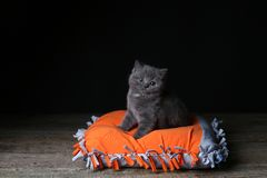 Kitten sitting on an orange pillow, black background. Wooden floor, isolated portrait stock photos