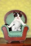 Kitten Sitting på en stol royaltyfria foton