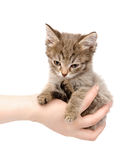 Kitten sitting on a palm. isolated on white backgr Royalty Free Stock Images
