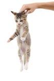 Kitten sitting on a palm Stock Photo