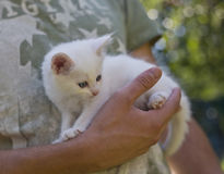 Kitten sitting on the palm of a man Stock Photo
