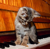 The kitten sitting on the piano keyboard royalty free stock image