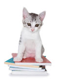 Kitten sitting on pile of books Stock Photo