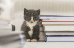 Kitten sitting beside pile of books Stock Photography