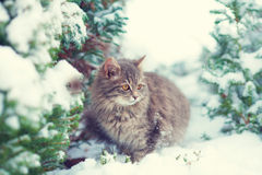 Kitten sitting on the pine tree Royalty Free Stock Photos