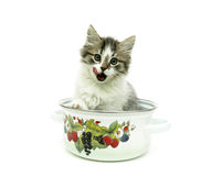 Kitten sitting in a pot on a white background Stock Photography