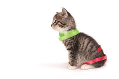 Kitten sitting with ribbons. A side view of a  kitten with red and green ribbons Stock Photos