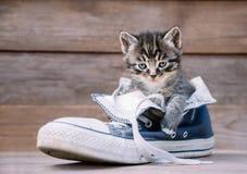 Kitten is sitting in a shoe. Little kitten is sitting in a shoe on a wooden background Royalty Free Stock Photo