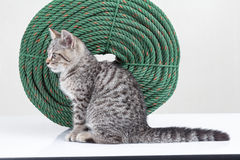 Beside of Kitten sitting beside the side of the rope Stock Photography