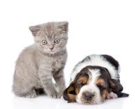 Kitten sitting with sleeping basset hound puppy. isolated on whi Stock Image