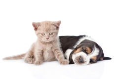 Kitten sitting with sleeping basset hound puppy. isolated. On white royalty free stock photo