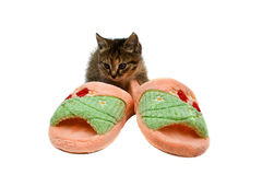 Kitten sitting in a slipper isolated on a white. Background Royalty Free Stock Photos