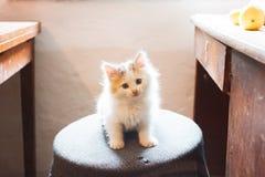 Kitten sitting on stool Royalty Free Stock Photos