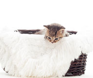 Kitten sitting in a straw basket Royalty Free Stock Photography