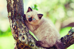 Kitten sitting on a tree Stock Images