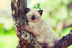 Kitten sitting on a tree Royalty Free Stock Photo