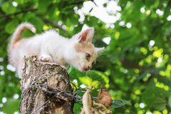 Kitten sitting on tree Stock Photo