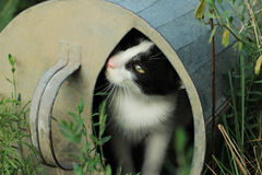 Kitten sitting in a watering can. In the garden Royalty Free Stock Photo