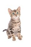 Kitten sitting on white Stock Photography