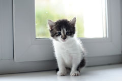 Kitten sitting on a window Royalty Free Stock Photography