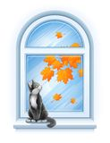 Kitten sitting on windowsill of autumn window Royalty Free Stock Image
