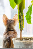 Kitten sitting on a windowsill with a flower and looking out the window. View from the back stock photo
