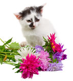 Kitten Sitting With Flowers Royalty Free Stock Photo